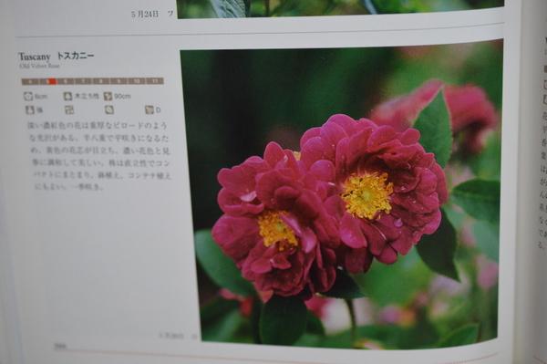 DSC_0082_20130522150017.jpg