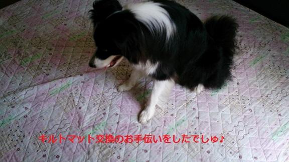 s-DSC_0842.jpg