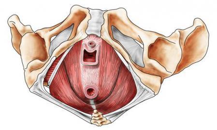 骨盤底筋1