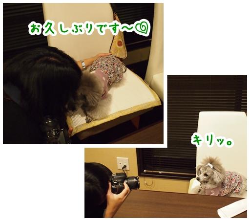 cats_20140110000614235.jpg