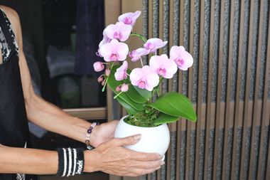 20110709母の日プレゼント【画像小】