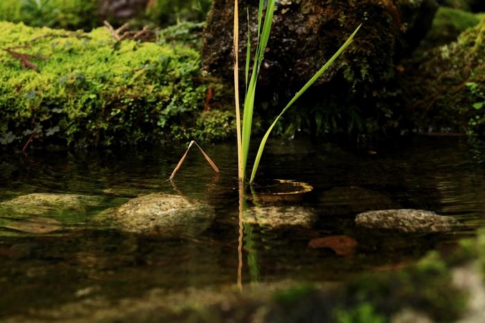 tenjyuan1411_07.jpg