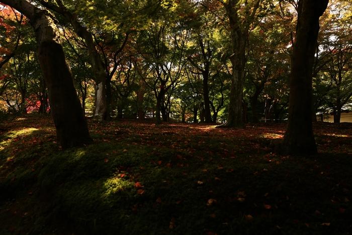 tofukuji1411_13.jpg