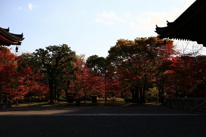toji1411_03.jpg
