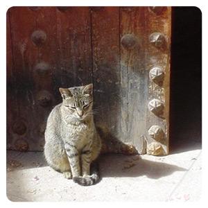 モロッコ猫1