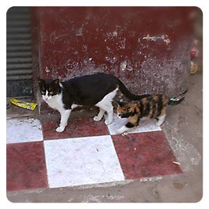 モロッコ猫親子