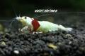 ebipi:shrimps