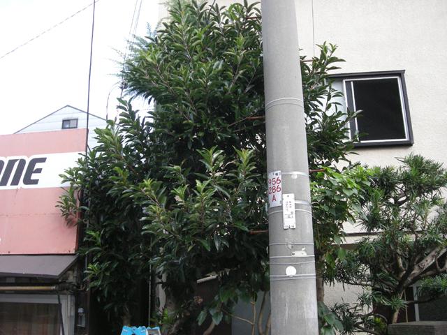 DSCN4060.jpg