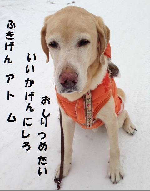 ___20130201170405.jpg