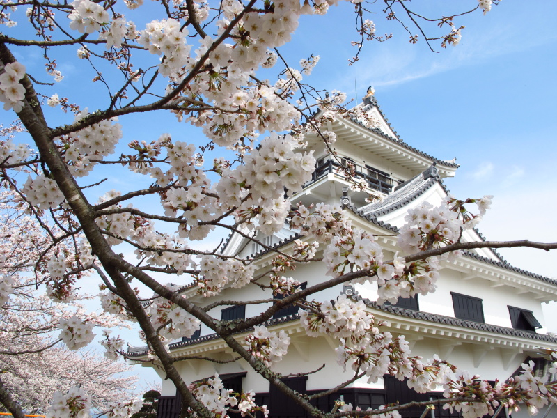 20120324_sakura.jpg