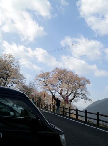 ひょうたん桜と宿五郎