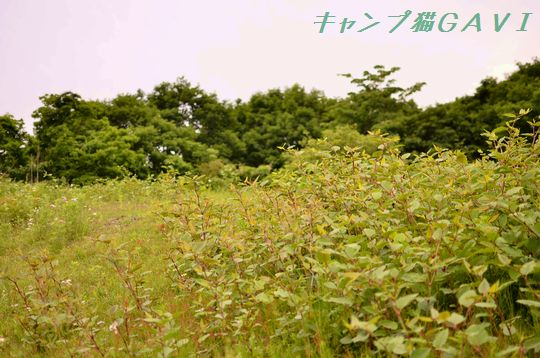 120601_1450.jpg