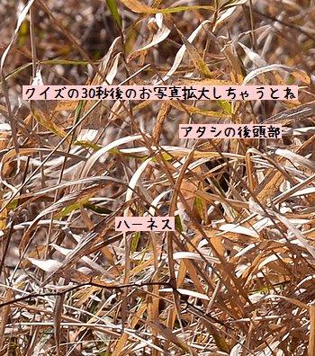 130316_7837.jpg
