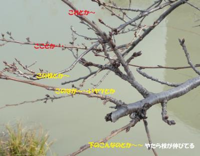 DSC064000.jpg