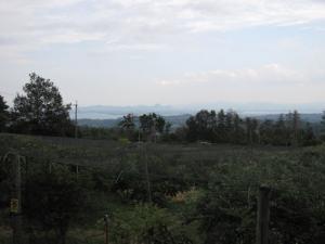 ブルーベリー畑と琵琶湖