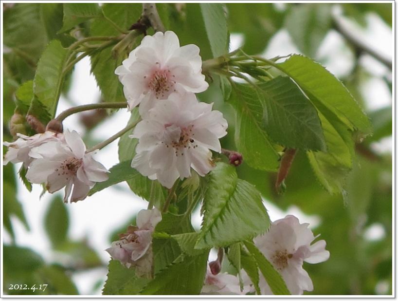姥桜|*日日是好日*