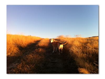 羊の国のラブラドール絵日記シニア!!「セカチュー」写真2