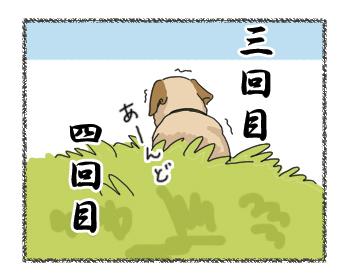 羊の国のラブラドール絵日記シニア!!「●●●の神様」4コマ3