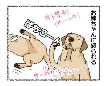 羊の国のラブラドール絵日記シニア!!「エチケット」4コマ4