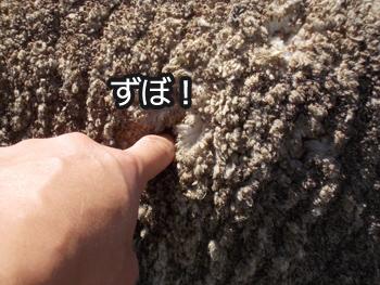 羊の国のラブラドール絵日記シニア!!「稼ぎそこない」写真1