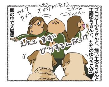 羊の国のラブラドール絵日記シニア!!「正解は?」4コマ3