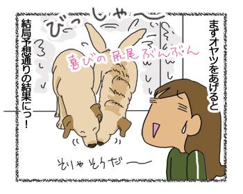 羊の国のラブラドール絵日記シニア!!「正解は?」4コマ4