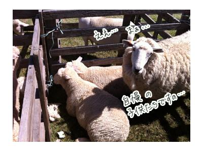 羊の国のラブラドール絵日記シニア!!写真日記「タイトルどおり・・・」3