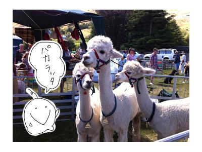 羊の国のラブラドール絵日記シニア!!写真日記「タイトルどおり・・・」5
