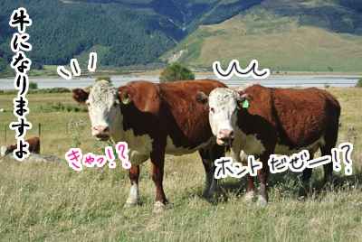 羊の国のラブラドール絵日記シニア!!写真日記「天気の良い日は」写真2