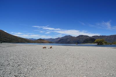 羊の国のラブラドール絵日記シニア!!写真日記「天気の良い日は」写真3
