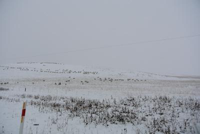 羊の国のラブラドール絵日記シニア!!「行きはよいよい、帰りは・・・?」写真日記5