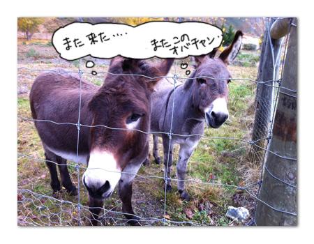 羊の国のラブラドール絵日記シニア!!「浮気の結論」写真1