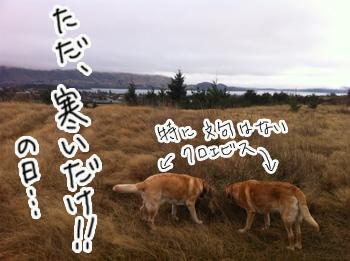 羊の国のラブラドール絵日記シニア!!「大雪警報発令中」写真1