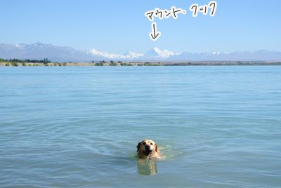 羊の国のラブラドール絵日記シニア!!キャンプ写真1