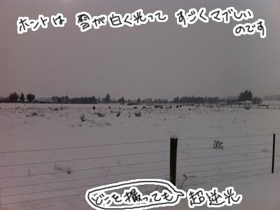 羊の国のラブラドール絵日記シニア!!「冬の二日目」写真日記5