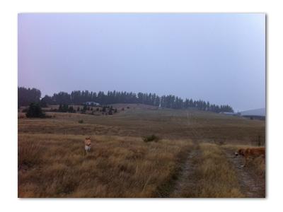 羊の国のラブラドール絵日記シニア!!「寒波到来」写真4