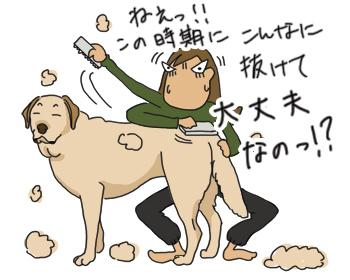 羊の国のラブラドール絵日記シニア!!「抜けすぎ注意報」イラスト1