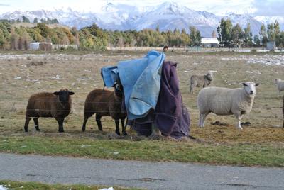 羊の国のラブラドール絵日記シニア!!「デザートにたとえると」写真日記7