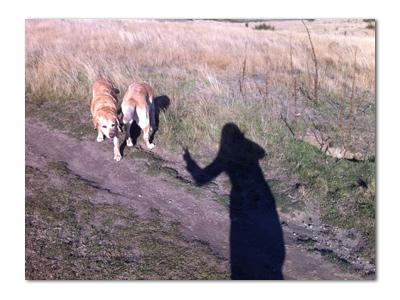 羊の国のラブラドール絵日記シニア!!「さすがにそれは」写真1