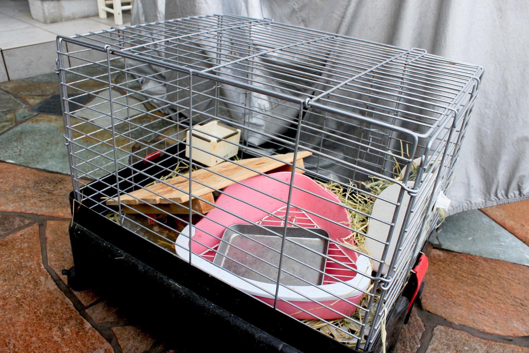 ウサギ小屋掃除