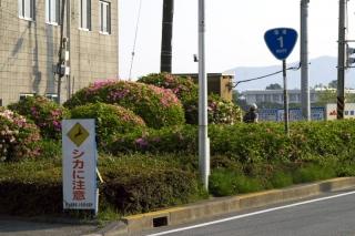 旧東海道:酒匂橋左岸橋詰の植え込み