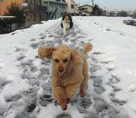 わぁー雪だぁ