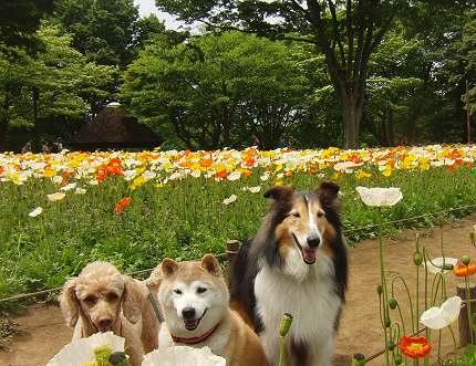 公園のお花満開