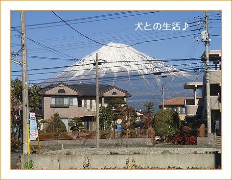 ブリーダーの家の前から見える富士山