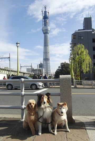 スカイツリー墨田公園