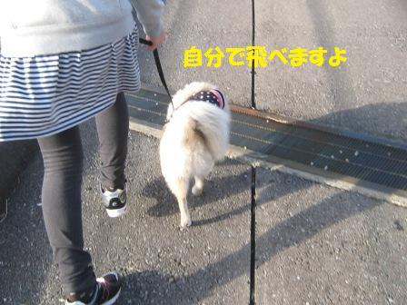 20141116_9.jpg