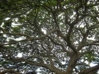 この木なんの木の中