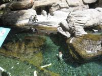 ペンギンと鯉