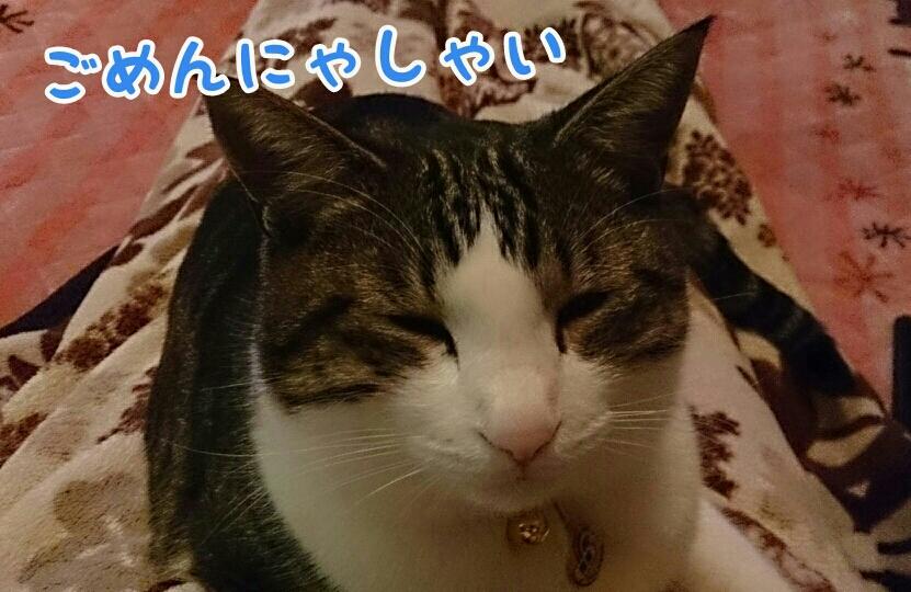 fc2_2014-01-20_00-14-53-011.jpg