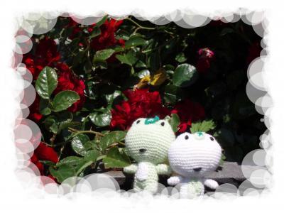 薔薇公園にて♡